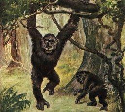 gorilla-h.jpg