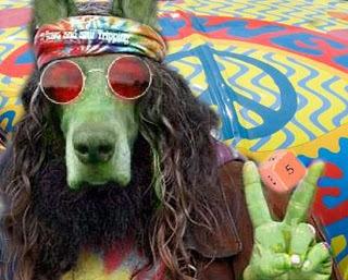 hippie-dog