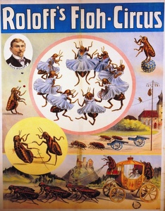 roloffs-flea-circus-advertising-1906-1908-7573021